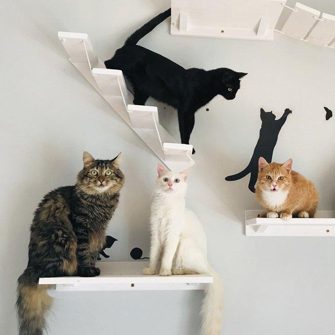 4-gatti