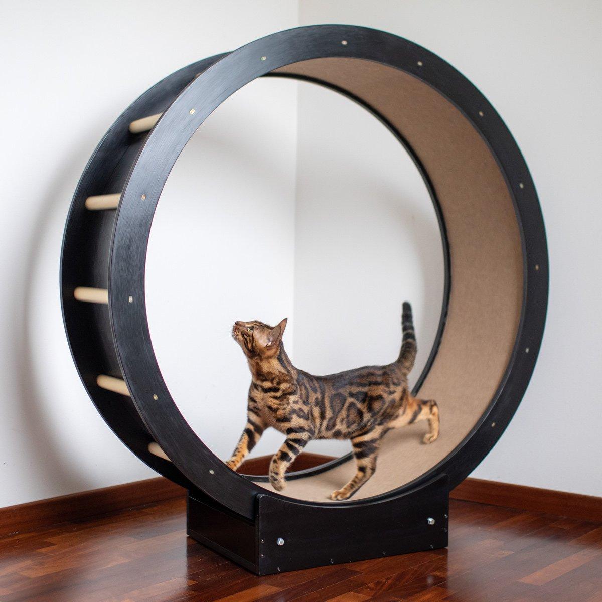 Percorsi-per-gatti-Ruota-NE-3-square