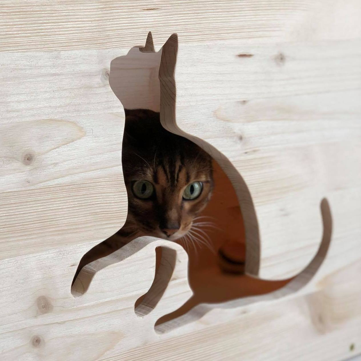 forma-gatto-intero