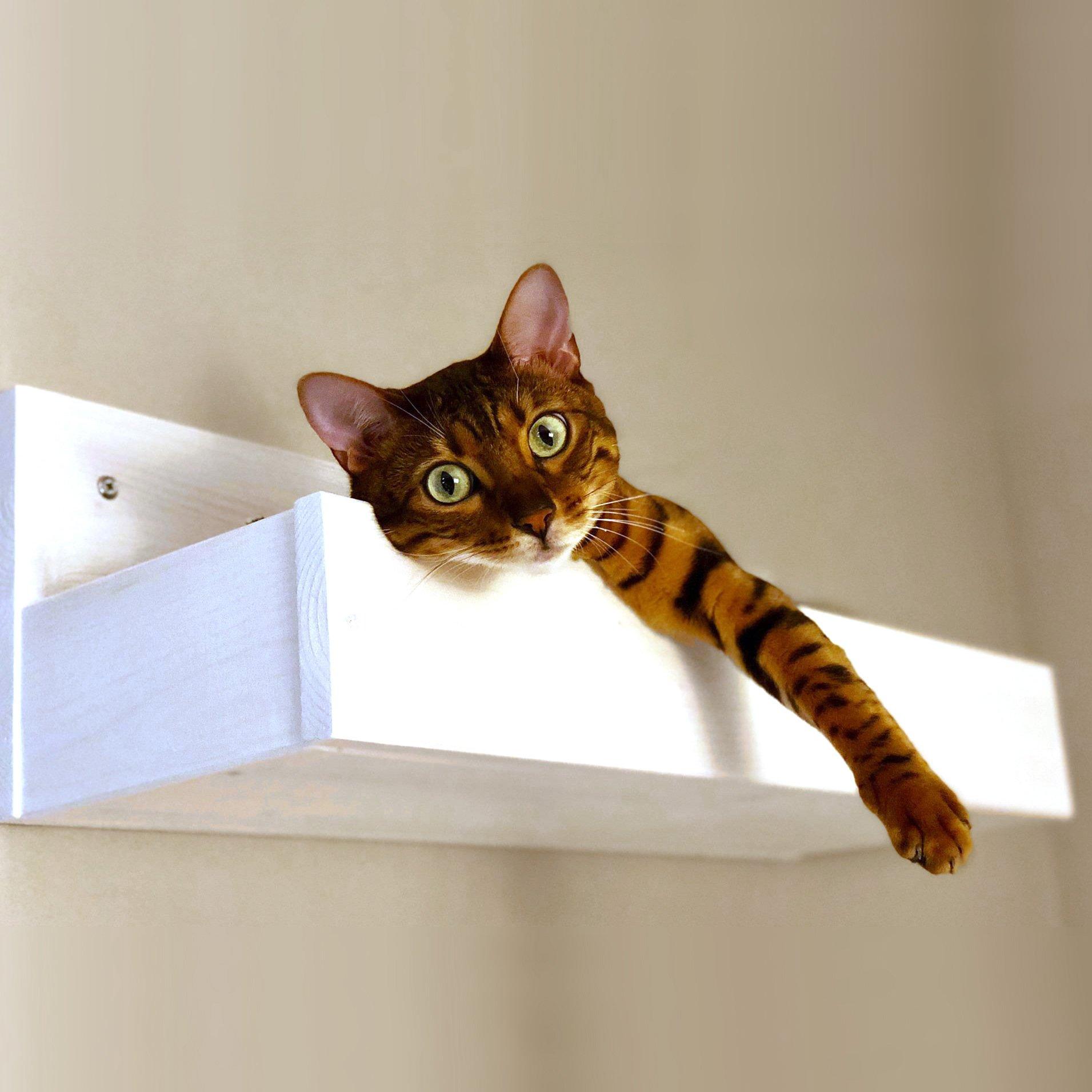 gatto-scatola-neutro