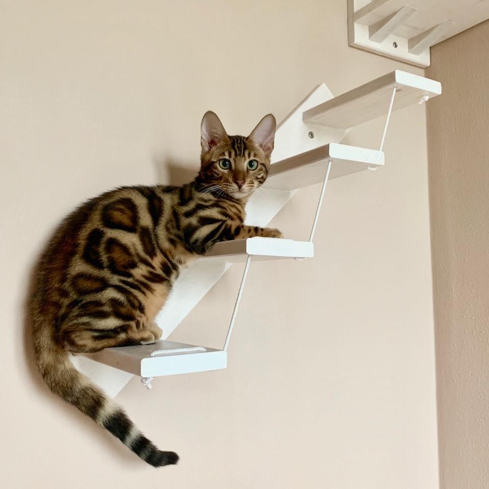 scaletta-1-gatto