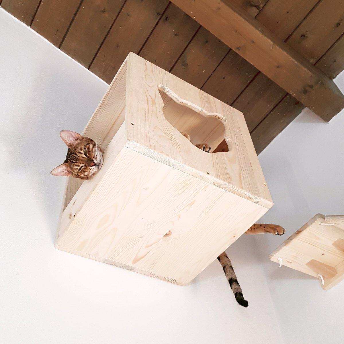 gatto-soffitto