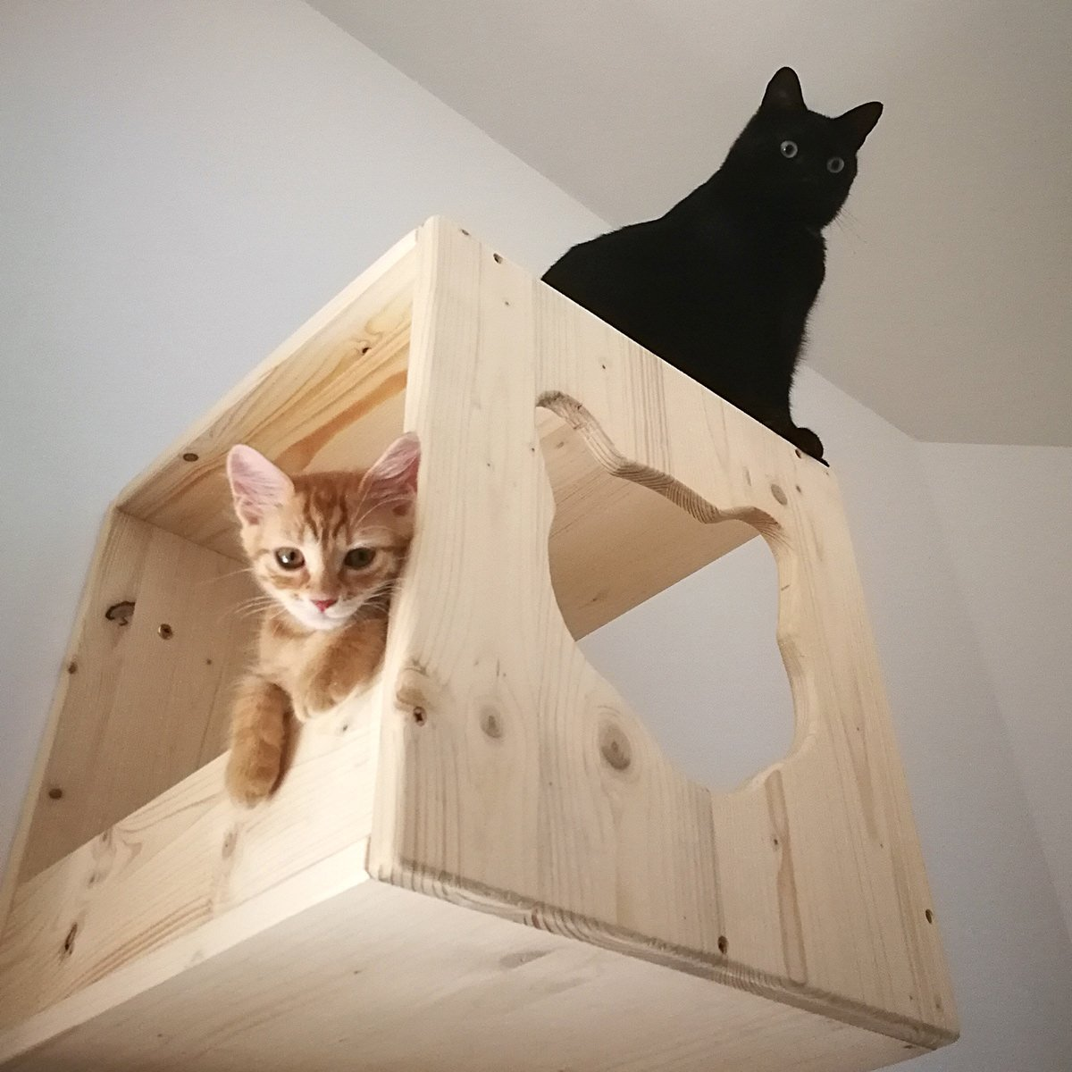 percorsi-per-gatti-IMG_5365mod